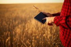 Smart que cultiva usando tecnologias modernas na agricultura Equipe o fazendeiro do agrônomo com o tablet pc digital no trigo foto de stock royalty free