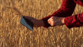 Smart que cultiva usando tecnologias modernas na agricultura O fazendeiro do agrônomo guarda a exposição de tablet pc digital do  video estoque
