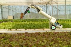 Smart robotic in agriculture futuristic concept, robot farmers automation must be programmed to work to spray chemical,fertilize. R or increase efficiency stock photography