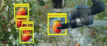Smart robotic in agriculture futuristic concept, robot farmers automation must be programmed to work to collect vegetable and fr. Uit by using deep learning and royalty free stock images