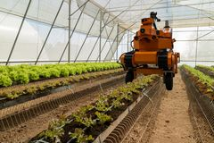 Smart robotic in agriculture futuristic concept, robot farmers automation must be programmed to work to spray chemical,fertilize. R or increase efficiency royalty free stock images