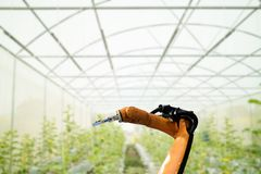 Smart robotic in agriculture futuristic concept, robot farmers. Automation must be programmed to work in the vertical or indoor farm for increase efficiency Royalty Free Stock Images