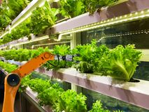 Smart robotic farmers in agriculture futuristic robot automation to vegetable royalty free stock image