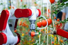 Smart robotic farmers in agriculture futuristic robot automation to work to spray chemical fertilizer. Or increase efficiency royalty free stock photography
