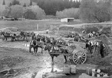 Smart`s Shingle Pit & Draught Horses, Spreydon, Christchurch. Stock Photography
