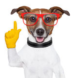 Smart school dog Stock Images