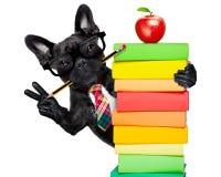 Smart school dog stock photo
