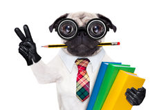 Smart skolahund Royaltyfria Bilder