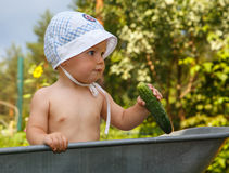 Smart toddler with cucumber in garden barrow. On sunny background Royalty Free Stock Photo