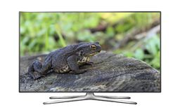 Smart tv with frog on screen wallpaper Stock Photo