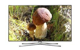 Smart TV with Oak Mushrooms image on screen Royalty Free Stock Photography