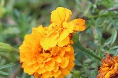 Smarta Blurr blommar korrekt bakgrund Royaltyfri Foto