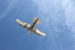 smartbird festo стоковая фотография