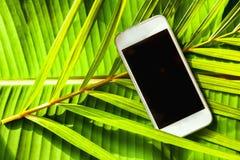 Smartphone на зеленой естественной предпосылке тропической, ладонь выходит, стоковое фото