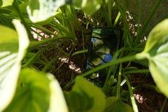 Smartphone chujący w zielonych roślinach fotografia stock