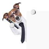Smartphone de chien image stock