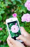 Smartphone a disposición que toma la foto Imagenes de archivo