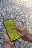 Smartphone en gisement de riz de vert d'exposition d'affichage de Hans sur un fond sec et criqué de la terre Photographie stock libre de droits