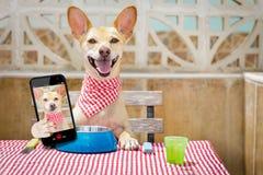 Smartphone hambriento del perro y del selfie fotografía de archivo