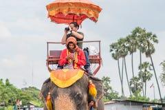 Smartphone na??g Obsługuje pochłoniętego telefonem komórkowym podczas gdy jadący słonia obrazy stock