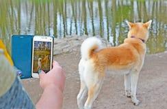 Smartphone nas mãos da mulher que fotografam o cão imagens de stock