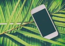 Smartphone op een groene natuurlijke tropische achtergrond, palmbladen, Royalty-vrije Stock Fotografie