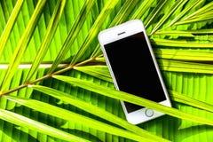 Smartphone op een groene natuurlijke tropische achtergrond, palmbladen, Stock Foto's