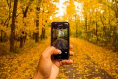 Smartphone photographing fall foliage