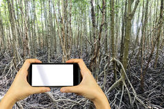 Smartphone shooting concept. A huge mangrove field of Thung Pron Royalty Free Stock Photo