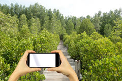 Smartphone shooting concept. A huge mangrove field of Thung Pron Royalty Free Stock Photography