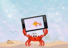 Smartphone underwater Royalty Free Stock Image