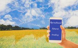 Smartphone van de handholding, gouden gebieden als achtergrond en grafieken die voorraden, de organische landbouwproducten van de royalty-vrije stock afbeeldingen