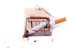 Smashed cigarette on mousetrap Royalty Free Stock Image