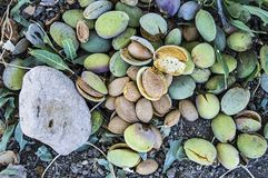 Smashing almond with stone, pouring almonds, eating almonds is good for health, natural almonds, dry almond seeds Stock Photo