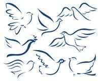 Símbolo de la paloma del vector Fotografía de archivo libre de regalías