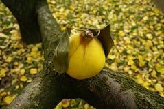 Símbolo del otoño Fotografía de archivo libre de regalías