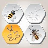 Símbolos de la abeja en honeycell Imagen de archivo