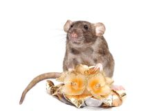 Smell broun rat with candle flowers Royalty Free Stock Images