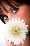 Smell of a daisy Stock Photography
