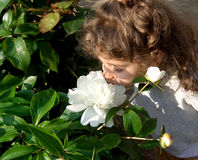 Smell the flowers. A little girl who smell a flower in a garden Royalty Free Stock Images