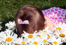 Smell the flowers. A toddler falling in the flowers after smelling them Stock Image