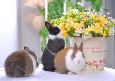 Smell the flowers-Pet rabbit Royalty Free Stock Image