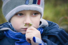 The smell of herbs. Thoughtful boy is enjoying the aroma of the milfoil flower Stock Image
