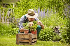 Smell man seedling Garden Royalty Free Stock Photography