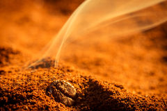 Smell of roasted ground coffee. Closeup smell of roasted ground coffee royalty free stock photography