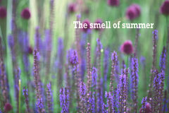 The smell of summer Stock Photo