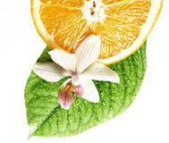 Smell of tropical fruit and flower isolated Stock Photos