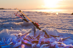 Smelt fishing Royalty Free Stock Images
