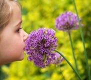 Smelling Allium Royalty Free Stock Photos
