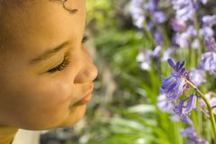 Smelling The Bluebells. A beautiful mixed race little girl smelling bluebells Royalty Free Stock Image